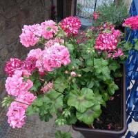 flores_5.jpg