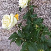 s_flores_13.jpg